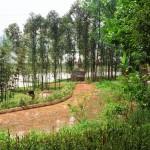 sichuan_village_trees