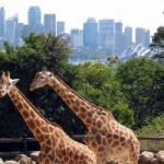 Sydney_taronga_zoo_200px