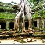 More_Angkor_Trees_15033349344.jpg
