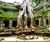 More_Angkor_Trees_15033349344.jpg