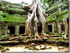 More_Angkor_Trees_15033349344